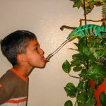 How To Feed a Chameleon: The 5 Best Ways