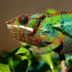 Chameleon Humidity: What You Need To Know