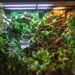 11 Essential Accessories & Supplies For A Chameleon Cage