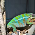 These Lights Are Essential For A Pet Chameleon
