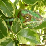 25 Beautiful Plants That Are Safe For Chameleons