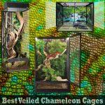 Best Veiled Chameleon Cages for 2020