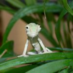 Caring For Baby Chameleons - How To Raise Them Right