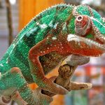 How To Clean A Chameleon Cage? The Everyday Items You Need