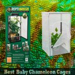 Best Cages For Baby Chameleons in 2021